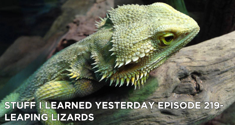 SILY Episode 219-Leaping Lizards